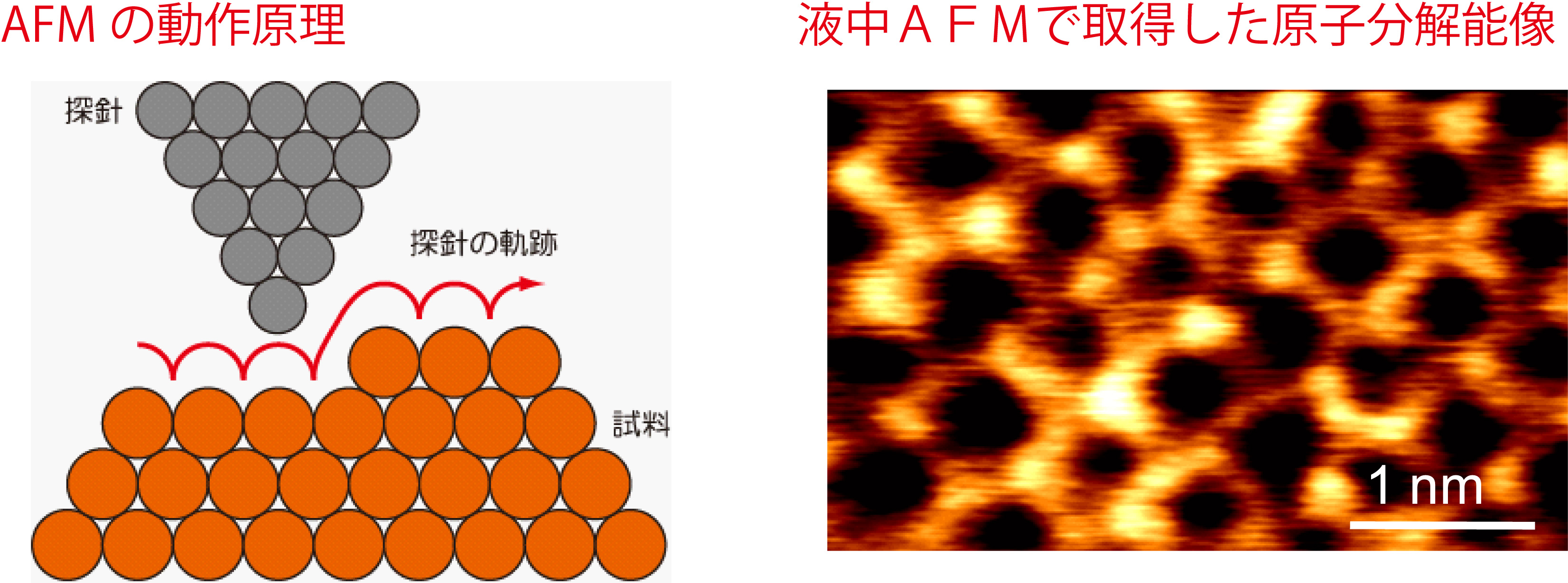 Development of high-resolution atomic force microscopy technologies for applications for biophysics