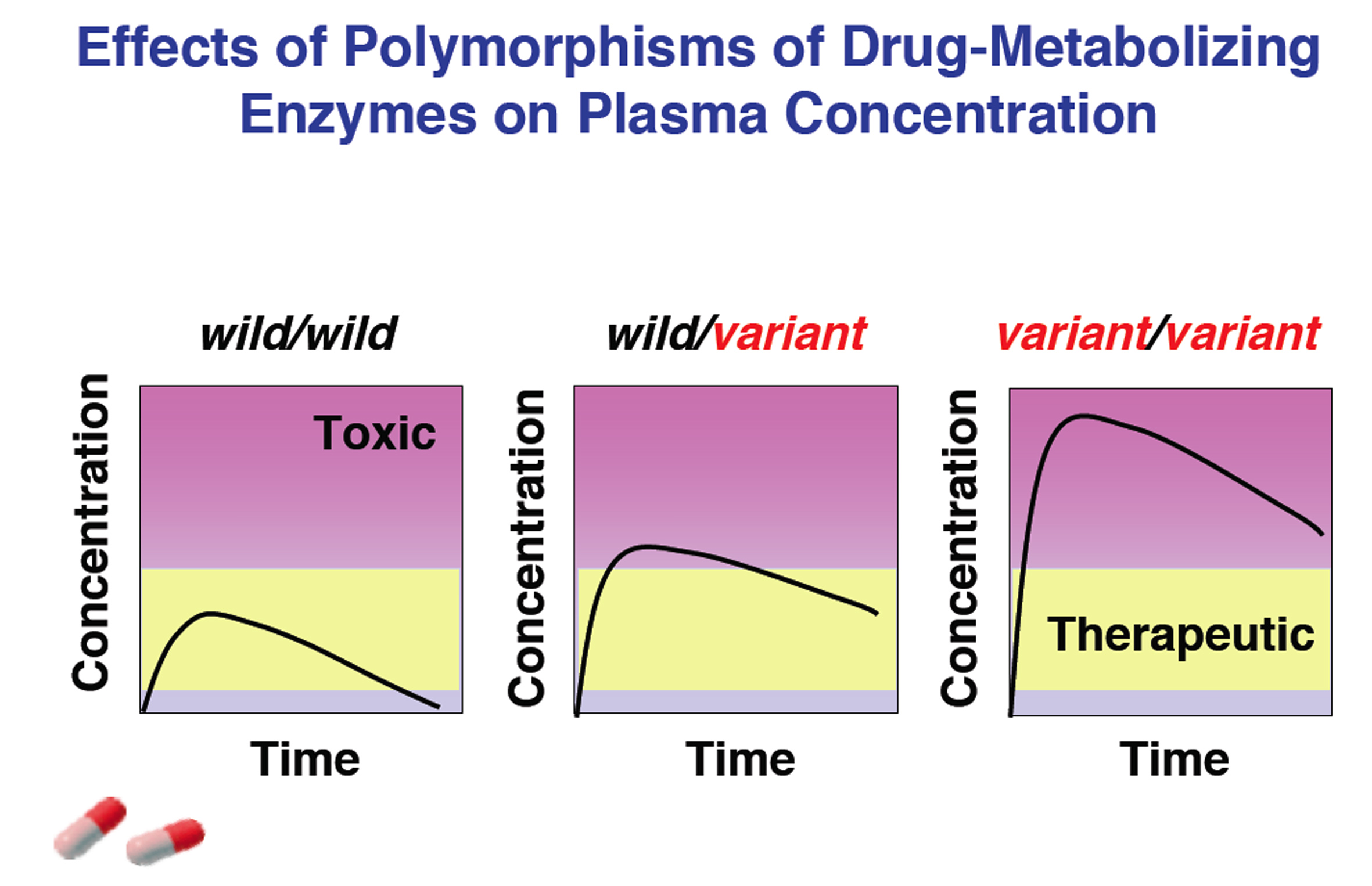 Genetic polymorphisms of Drug-metabolizing enzymes