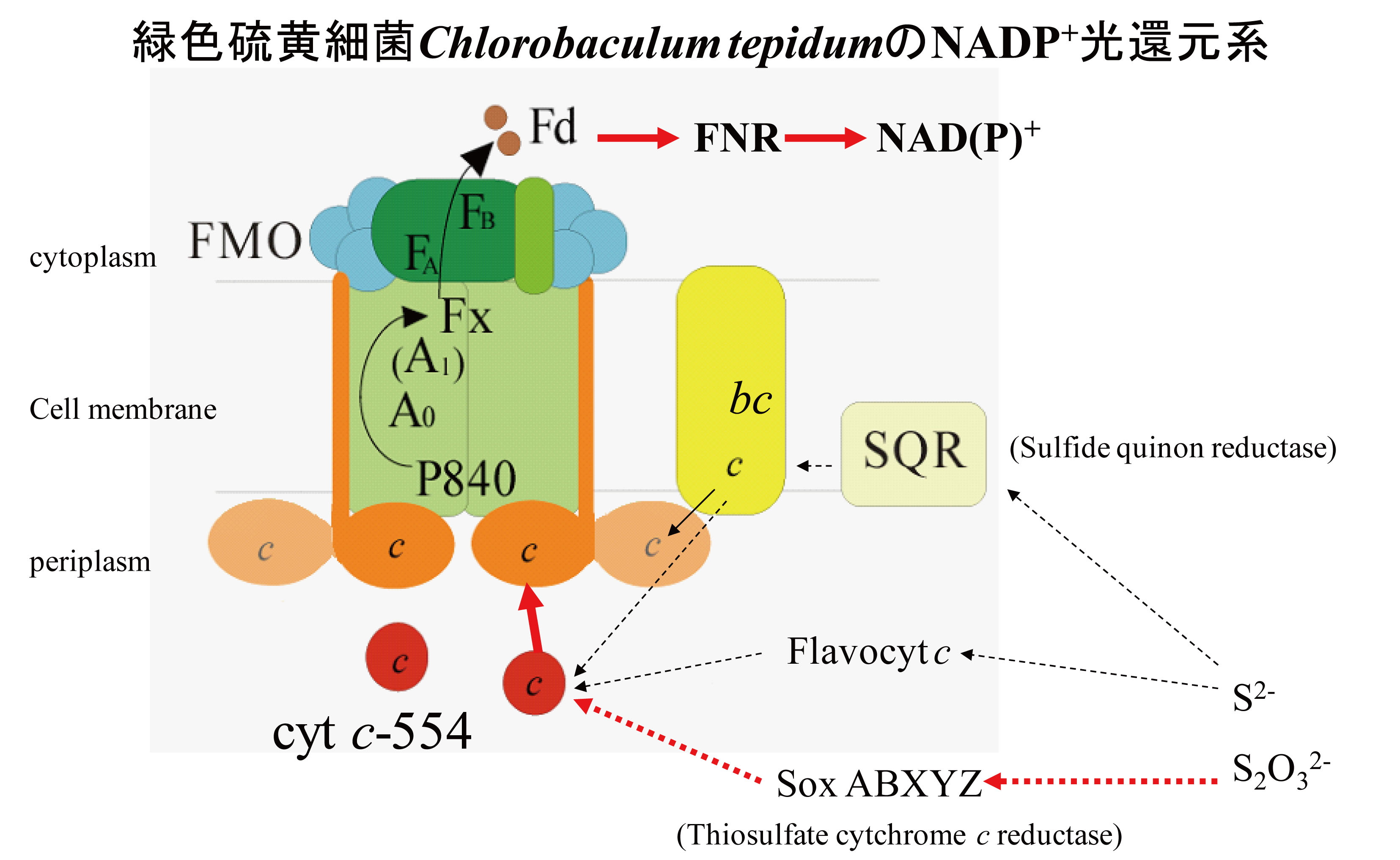 Iron sulfur type photosynthetic reaction center from photosyntetic bacteria
