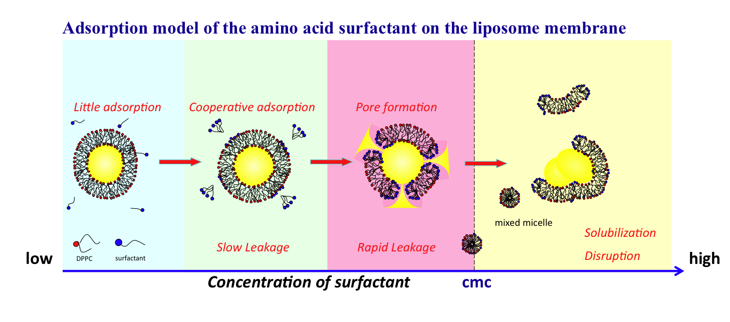 Interaction between biomaterials and surfactant