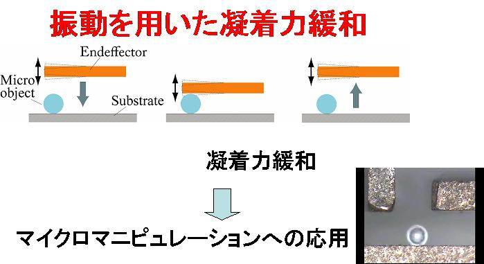 Adhesion Forces Reduction by Oscillation and Its Application to Micro Manipulation