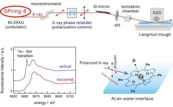 X-ray Absorption Spectroscopy at Liquid Interfaces